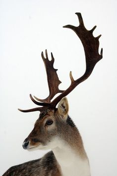 F&O FABFORGOTTENNOBILITY #deer