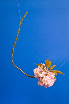 Blossom by Raw Color | PICDIT #photo #color #photography #blue #colour #plant