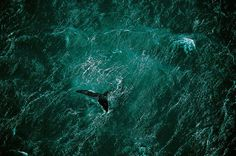 Hi Def Photos Earth From Above: Stunning Images by Yann Arthus Bertrand My Modern Metropolis #ocean #tail #aerial #water #whale #mammal #photography #sea #swim #marine #animal