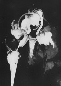 Trent Alexander Hernandez #white #rose #design #floral #black #photography