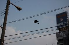 Tim Hansen – Osaka #photography #japan