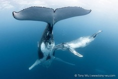 Absolutely Incredible Underwater Photography by Tony Wu