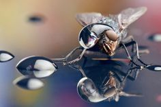 Macro Photography by Dmitriy Yoav Reinshtein #inspiration #photography #macro