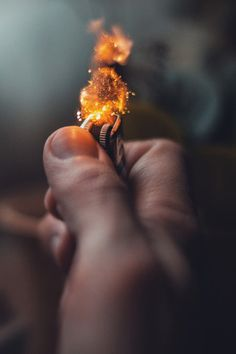 Luna & Hazel — these w0lves #photography #fire #lighter