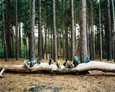 Beautifully Offbeat Photography (13 photos) - My Modern Metropolis #forest #shoes #friends