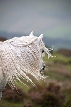 horse, wind
