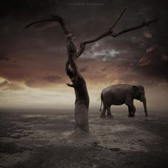 Photography by Achmad Kurniawan #photography #conceptual #inspira