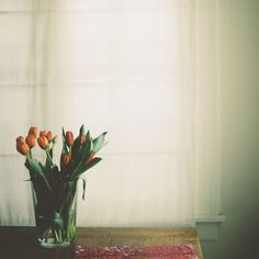 feels like spring | Flickr - Photo Sharing! #still #photography #life #film