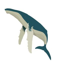 Whale Illustration #vector #humpback #whale #illustration #blue