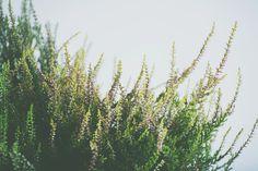 heather6.jpg