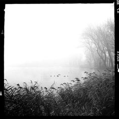Landscape Stories (LS 07|Trees Submissions - Dei rami e dell'acqua by...) #birds #water #tree