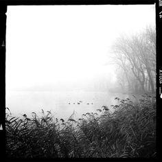 Landscape Stories (LS 07|Trees Submissions - Dei rami e dell'acqua by...)