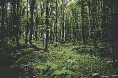 photo #michigan #outdoors #woods #photography #nature #deep #forest #dark