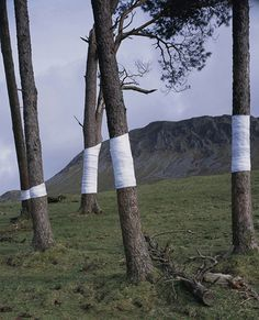 tree, line installation #photography #lines #tree #installation