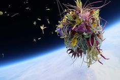 A Japanese Artist Launches Plants Into Space #flowers #clouds #space