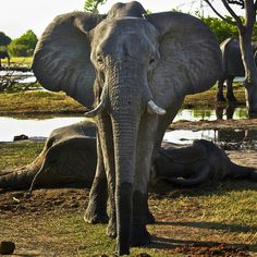 mourning #ivory #natgeo #africa #elephant #death