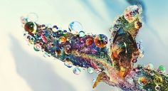 Strange Fruit - Nam Nguyens #drop #colorful #macro #water