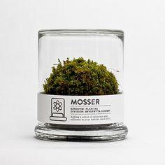 MOSSER scientific glass moss terrarium and spray by themosserstore #glass #terrarium #mosser