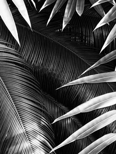 Sacha Maric #leaf #floral #plant #sacha maric