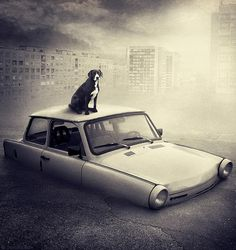Help Dogs With Images by Sarolta Ban #inspiration #surreal #photography