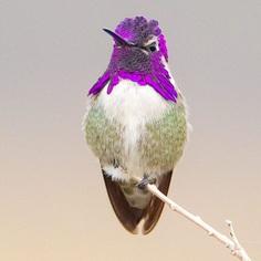 #kings_birds: Stunning Bird Photography by Ben Knoot