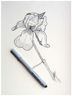 botany sketches on Behance #flower