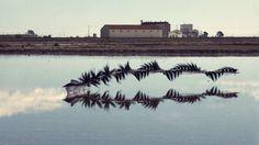 Xavi Bou Captures The Flight Patterns of Birds