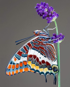 Pictures of Flowers And Butterflies by Adam Gor