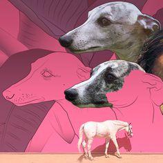 pink dog, white horse