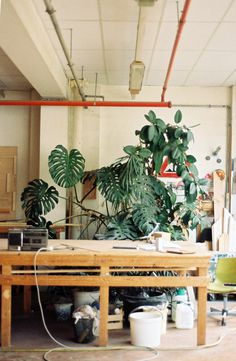 #monstera #monsteradeliciosa #plant #indoorplant #office #workspace