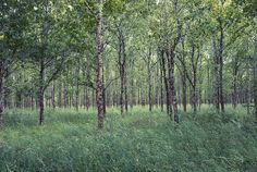 photo #wood #passing