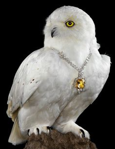 Jenny van Sommers | Still life photographer | Editorial #jenny #photographer #jewellery #bird #sommers #von #editorial #photohraphy