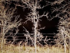 pool gallery » Selected Works #tree #photography #art