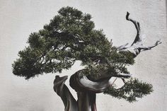 Stephen Voss Captures The True Beauty of Bonsai Trees