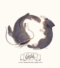 Catfish #inspiration #illustration #catfish