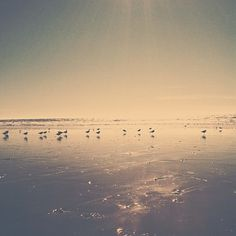 B3PO | Untitled #b3po #instagram #birds #photography #nature #landscapes #beach #california