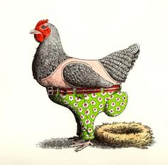 #Trouser #Eggs #Chicken #Funny #illustration