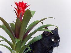 © Maxime Tetard #flower #cat