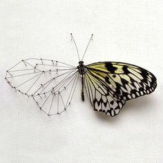 13/03 #butterfly