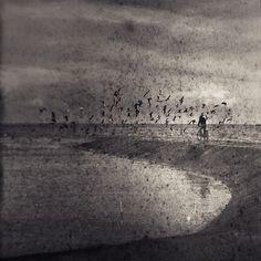 paukštukas #birds #sea