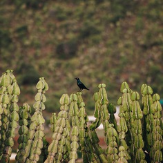 Hi Birdy #natgeo #natgeohub #natgeotravelpic #natgeocreative #africa #art #artoftheday #instaart #instagood #photo #photography #photobookIG #travel #canon #african #africans #africana #southafrica #limpopo #lens #camera #MagnumPhotos #color #photograph #justgoshoot #africaphotography #bugs #Nature #ant