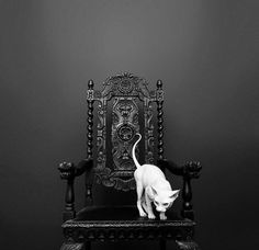 white Sphynx cat on black chair στο We Heart It /οπτικός σελιδοδείκτης #56006406 on imgfave