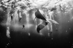 Whale Whisperers Photo by Anuar Patjane