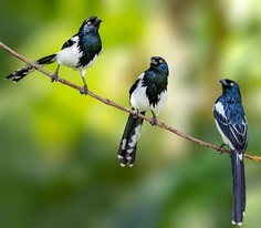 #instabird: Brilliant Bird Photography by Kacau Oliveira