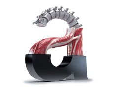 helv_a.jpg (500×380) #type #anatomy #typography