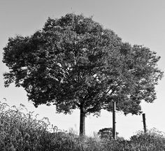 Black and White Photography by Andrew Atkinson | Professional Photography Blog #photography #white #black #and