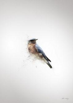 RVLVR X GRAPHICS DESIGNED #graphic design #birds