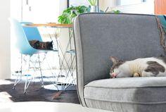 modern findings #cats #sleep