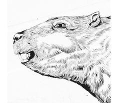 Il Castoro / The beaver #castoro #beaver #white #illlustration #venezia #& #black #zamoc #venice #luca #drawn #boat #barca #hand