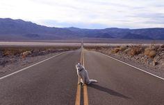 Hund sitzt auf einer Straße.